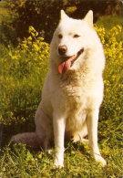 CALENDARIO DEL AÑO 2003 DE UN PERRO (CAN-DOG) (CALENDRIER-CALENDAR) - Calendarios