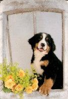 CALENDARIO DEL AÑO 2006 DE UN PERRO (CAN-DOG) (CALENDRIER-CALENDAR) - Calendarios