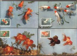 CHINA - KINA -  GOLD  FISH  On  POSTCARDS - Complet Set 12 V -  ORGINAL  CARD - Cto  MC - 1960 - PERFECT - RARE - 1949 - ... Repubblica Popolare