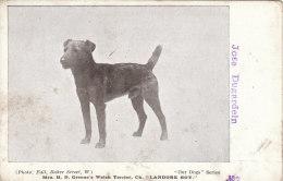 Cpa/pk 1918 Welsh Terrier Landore Boy Our Dogs Series #7 Unused Postcard - Honden
