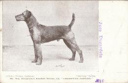 Cpa/pk 1918 Proudlove´s Airedale Terrier Crompton Oorang Our Dogs Series #19 Unused Postcard - Honden