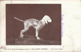 Cpa/pk 1918 Baty Bedlington Terrier Bellerby Bishop Our Dogs Series #10 Unused Postcard - Honden