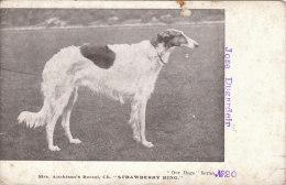 Cpa/pk 1918 Aitchison Borzoi Strawberry King Dog Our Dogs Series #20 Unused Postcard - Honden