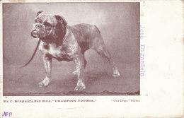 Cpa/pk 1918 Bridgland Bull Bitch Champion Totora Our Dogs Series #9 Unused Postcard - Honden
