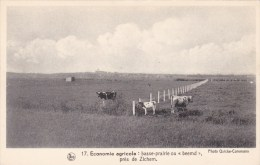Zichem - Beemd - Scherpenheuvel-Zichem