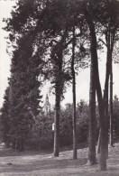 Averbode - ( Groot Formaat ) Land Van De Dennen - Scherpenheuvel-Zichem