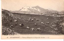 La Grave(Briançon-Hautes Alpes)+/-1910-Plateau D´Emparis-Signal Du Gauléon (Goléon)-Troupeau De Vaches Dans Les Alpages - Briancon