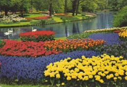 Holanda--Parque De Flores--1978--Zelanda---Milddenburg-a, Ginestas, Francia - Middelburg