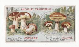 Chromo  AIGUEBELLE   Les Champignons   Bolets - Aiguebelle
