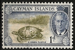 Cayman/Caimanes: Tartaruga Verde, Green Turtle, Tortue Verte - Schildkröten