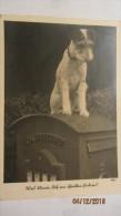 """AK Feldpost Vom 23.3.1940 Mit Hund Auf Briefkasten: """"Was Könnte Dich Am Schreiben Hindern?"""" - Hunde"""