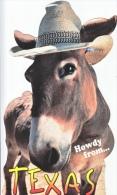 TEXAS  JACK ASS  WITH  HAT  MINT - Donkeys