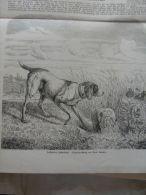 Hunting -Vorstehender Hühnerhund -Jagd - Jäger - Hunter -Guido Hammer Dog Chien- 1859  Gravure   1.ILZ1858.22 - Estampes & Gravures