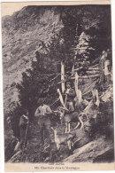 LES  ALPES.  265.  Chevriers  Dans  La  Montagne - France