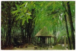 M868 China - Chengdu - Du Fu 's Thatched Hut / Viaggiata 1985 - Chine