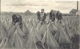 Culture De LIN - VLAS - On Retourne Les Carpettes - Men Keert De Kapellen - Tussen Kortrijk En Gent - Agriculture