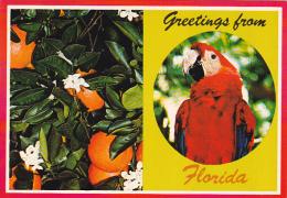 Greetings From Florida Multi View - Souvenir De...