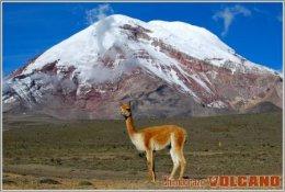 Chimborazo  Volcanoes Volcano  Postage Card 3268-11 - Vulcani