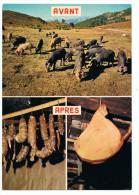 Cochons Corses  Pour La Charcuterie - Campesinos