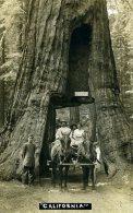 Passage Dans Un Sequoia - Etats-Unis