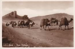 POSTCARD / CARTE - SIRIA SYRIA LIBANO - TOWARDS PALMYRA - CAMELLO CAMEL 133 - Syria