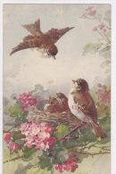 CARD KLEIN UCCELI PASSERI ROSA CANINA -FP-N-2- 0882-19060 - Klein, Catharina