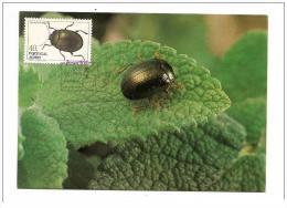 Carte Maximum Portugal Insectos Dos Açores 1984. - Non Classificati
