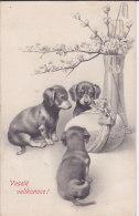 CARD CANE BASSOTTI  GUARDANO  UOVO BUONA PASQUA   -FP-VSF-2-0882-19075 - Hunde
