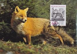 Carte-Maximum FRANCE N° Yvert 2541 (RENARD) Obl Sp Ill Rambures (Ed Engadin 5408) - Maximum Cards