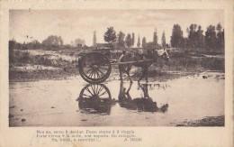 Italie -  Attelage Cheval - A. Negri - Carrettier - Postal Mark Carrara Torre Del Lago 1917 1920 - Carrara