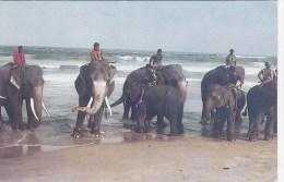 YP328. SRI LANKA - ELEPHANTS - Elephants
