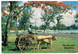 "Ile Maurice  ""The Ox-Cart"" (Le Char-à-boeuf) - Maurice"