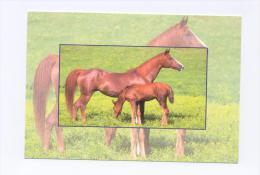 ANIMAUX : CHEVAUX - Poulain - Pferde