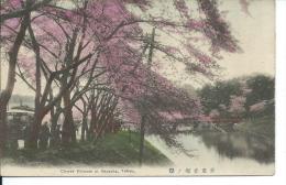 Cherry Blossom At Akasaka, Tokyo, Japan, 1900's Golden Age Postcard # 8786 - Tokyo