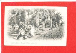 MISSERGUIN Cpa Animée Etude De Palmier      25 ND - Argelia