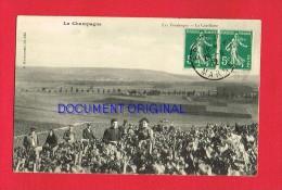 Marne - Les Vendanges - La Cueillette - France
