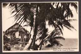 PA26) Native Hut & Cocoanut Palm Trees On The Coast Of Panama - RPPC - Panama