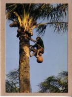 AFRIQUE EN COULEURS - CPM - 8495 - RECOLTE DU VIN DE PALME - éditeur IRIS - Postcards