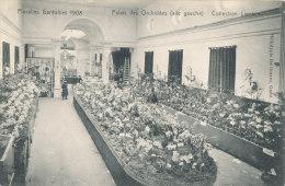 GENT / FLORALIEN 1905 /  PALAIS DES ORCHIDEES / COLLECTION LAMBEAU - Gent