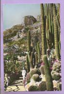 Cereus, Pilocereus Et Echinocactus Divers - Carabinier - Jardin Exotique De Monaco -  Photo Véritable - Fleurs, Plantes & Arbres