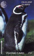 *FALKLAND ISLANDS - 184CFKB* -  Scheda Usata - Falkland Islands