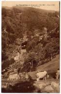 LE Chambon Sur Lignon - Les Eyvaras (vaches) - Le Chambon-sur-Lignon