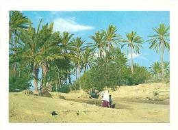 Cp, Tunisie, Chenini - Gabes - Tunisie