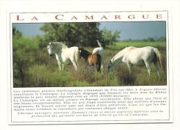 Cp, Métiers, En Camargue, Chevaux, écrite - Paarden