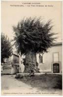 Viviers - Le Vieil Ormeau De Sully (arbre Nommé) - Viviers