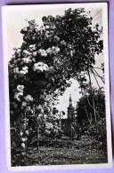 Société Des Amis Des Roses - Boulay Moselle - Eglise Paroissiale Vue Du Jardin Des Roses - Boulay Moselle