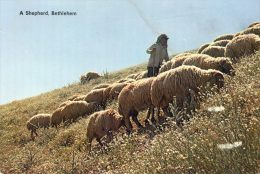 Bethlehem - A Shepherd - Berger - Moutons - Giordania