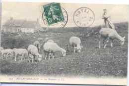CPA Cap Gris Nez Les Moutons - France