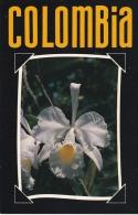 Colombia--Orquidea - Flores