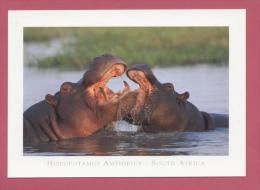 ANIMAUX : HIPPOPOTAMES - Flusspferde